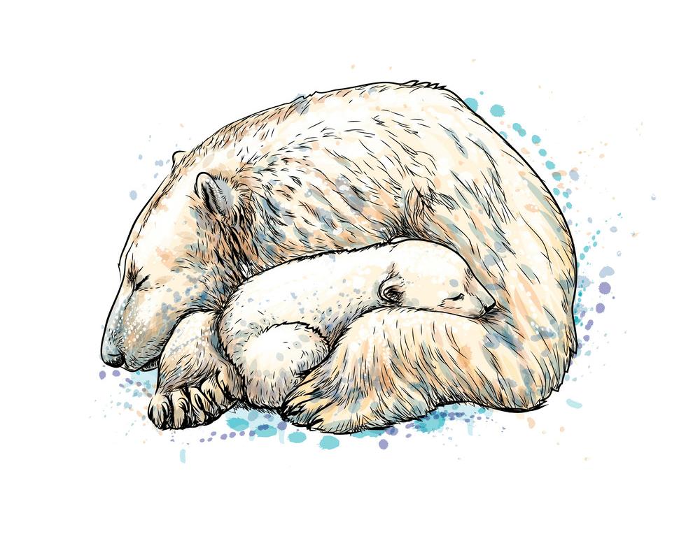 Polar Bears clipart images