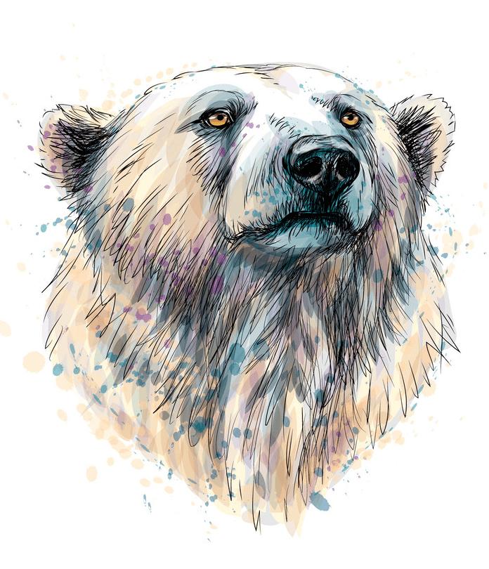 Polar Bears clipart png image