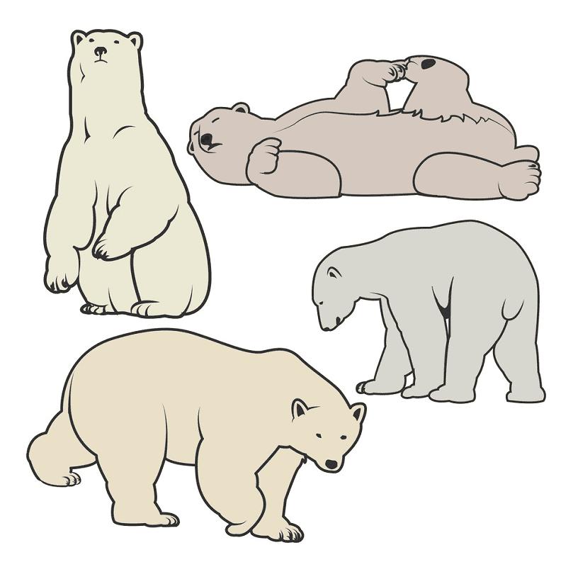 Polar Bears clipart png