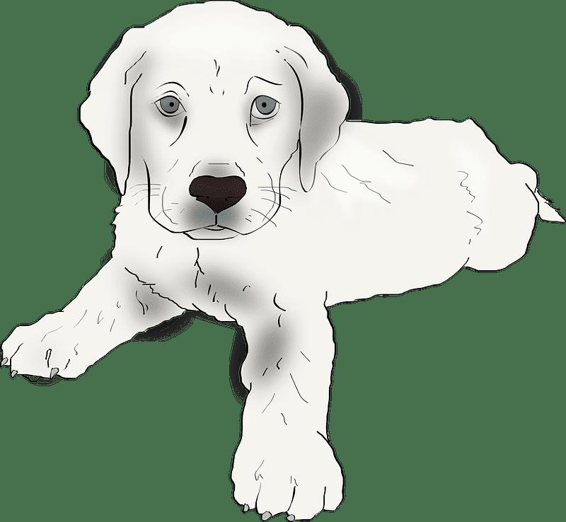 Puppy clipart transparent picture