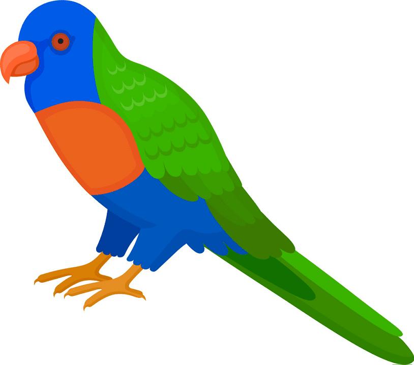 Clipart Parrot png