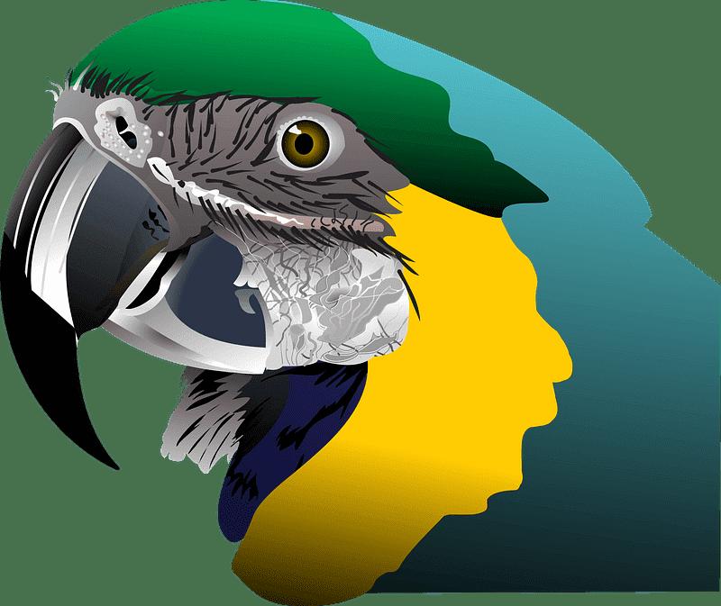 Download Parrot clipart transparent for kid