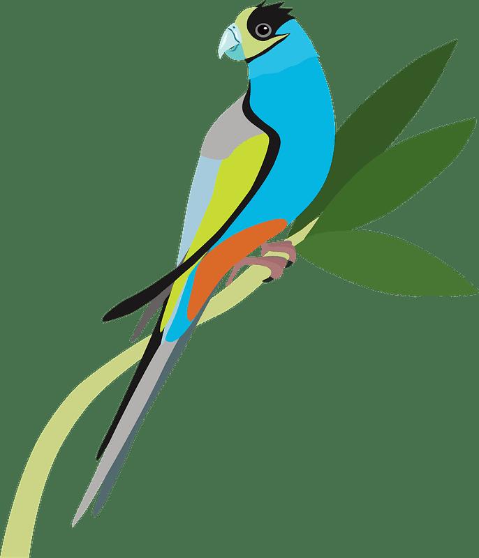 Download Parrot clipart transparent for kids