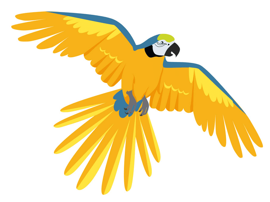 Flying Parrot clipart download