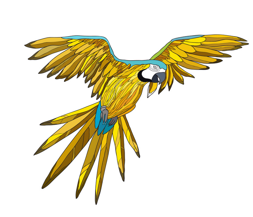 Flying Parrot clipart