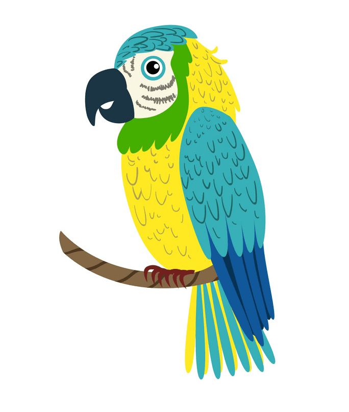 Free Parrot clipart download