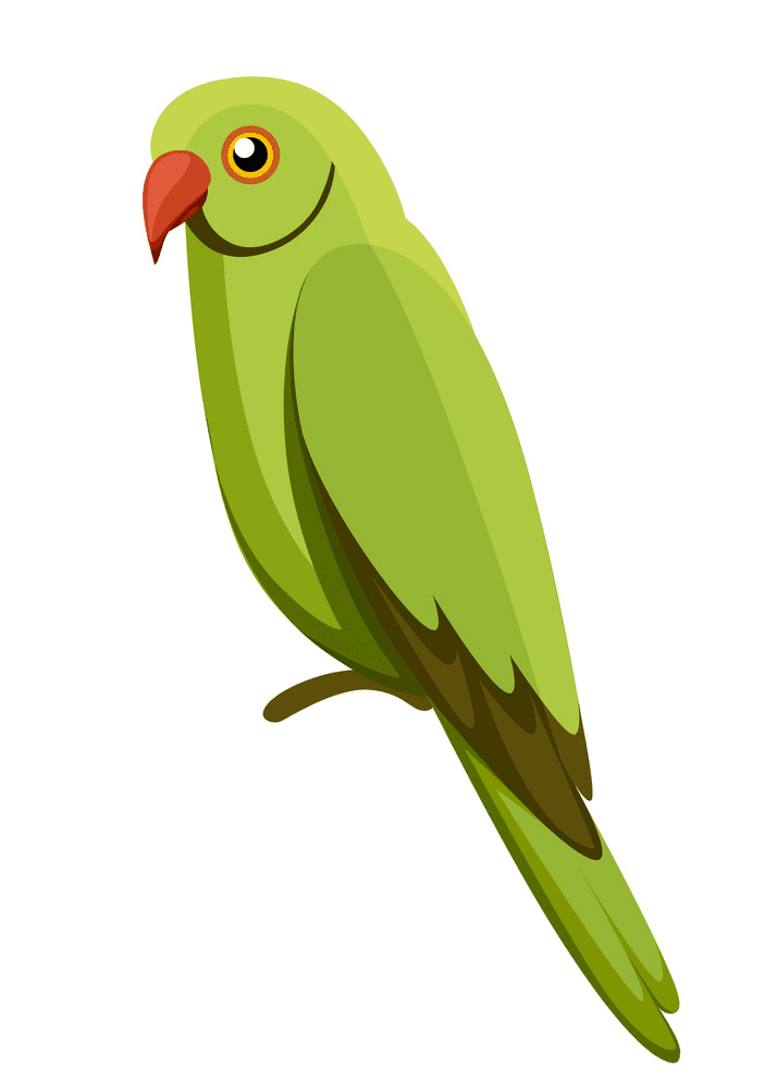 Free Parrot clipart for kid
