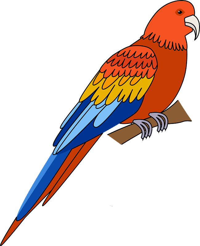 Free Parrot clipart transparent for kid