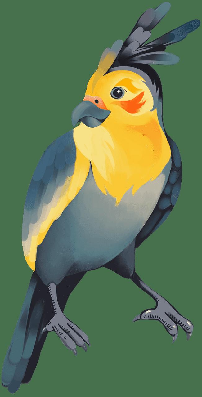 Free Parrot clipart transparent
