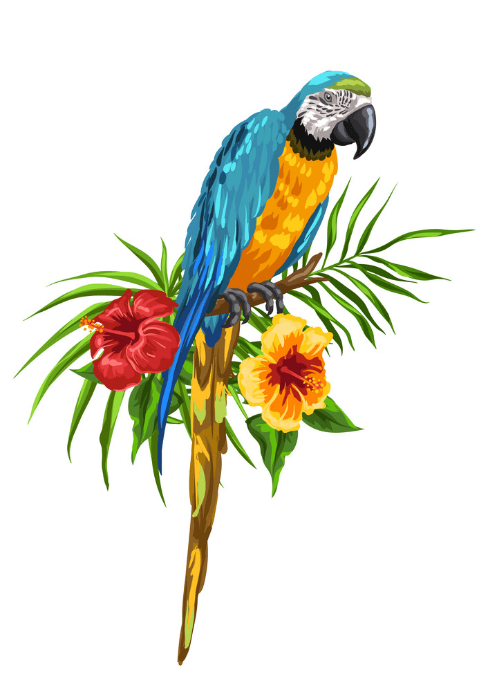 Free Parrot clipart