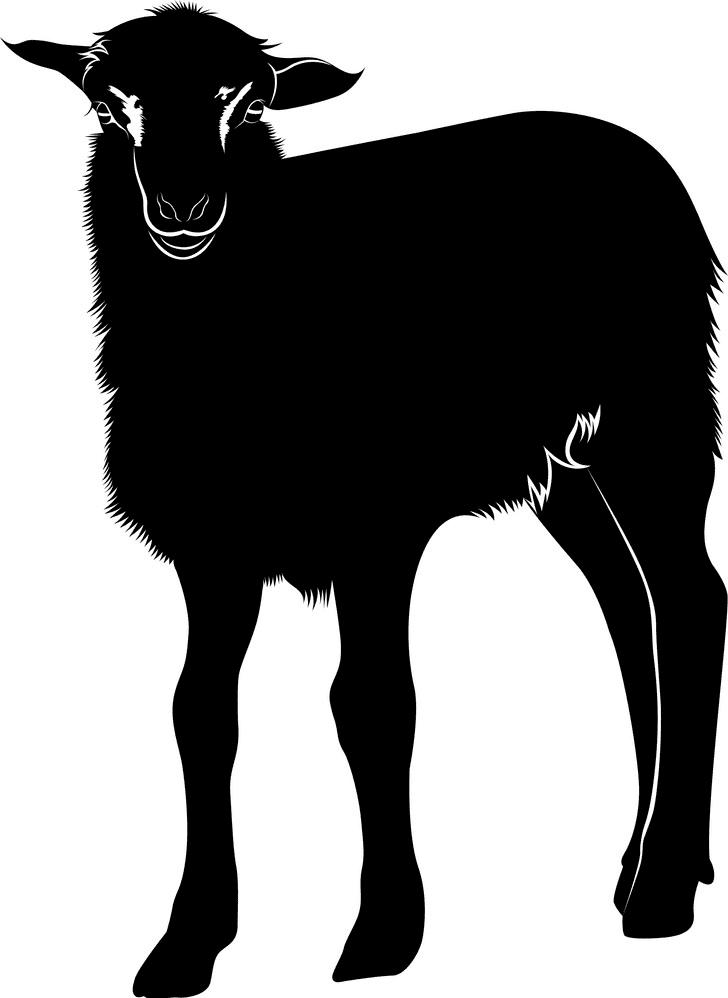 Lamb clipart 9