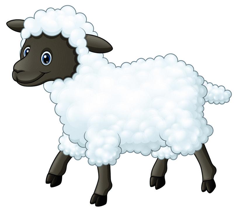 Lamb clipart image