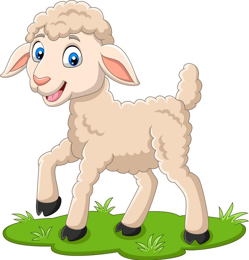 Lamb clipart picture