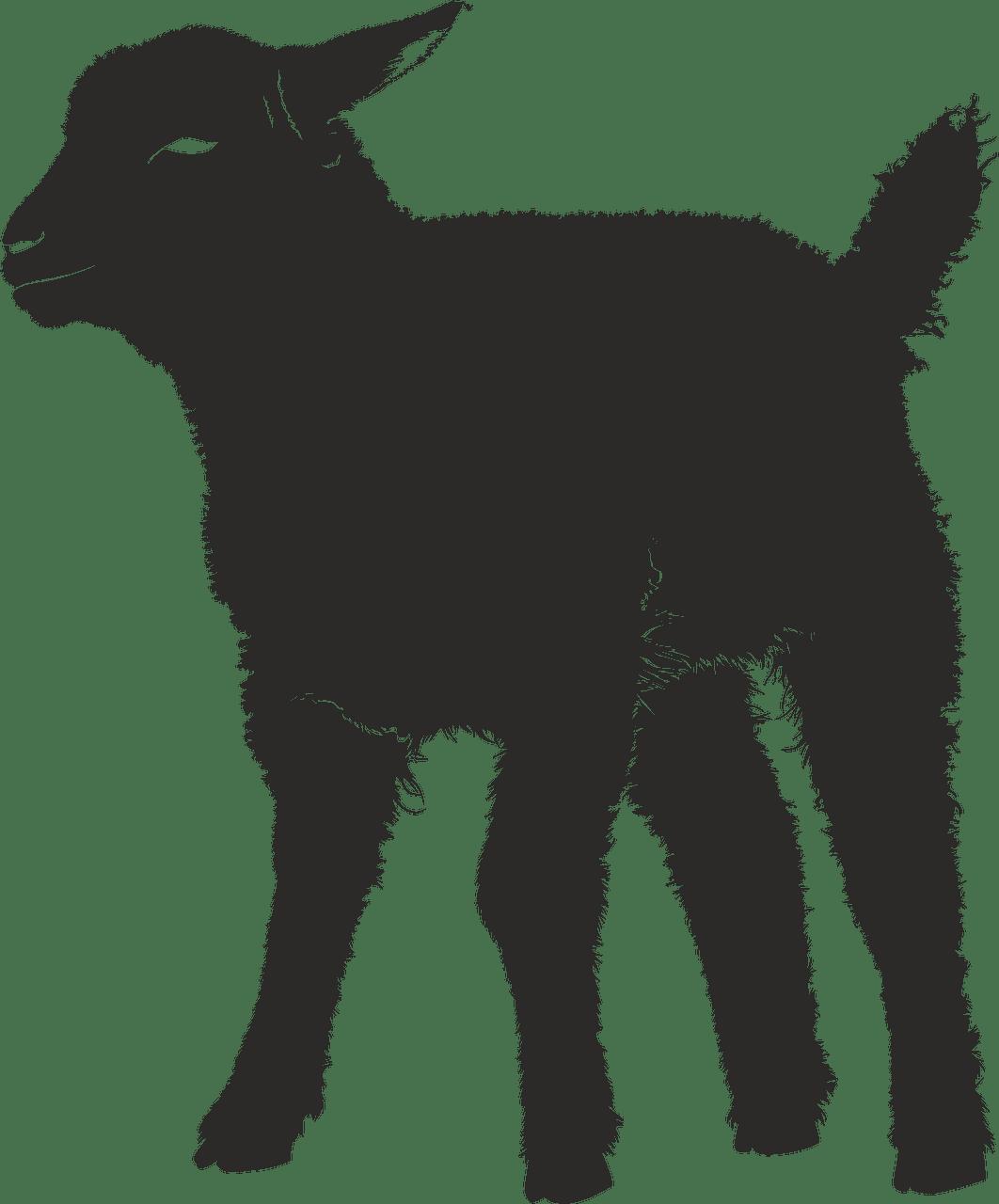 Lamb clipart transparent 2