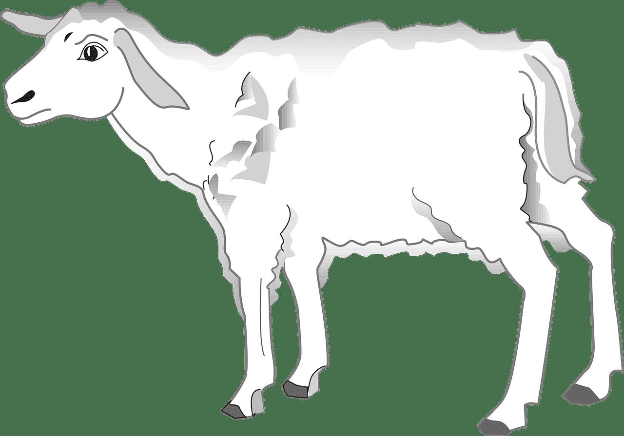 Lamb clipart transparent 3