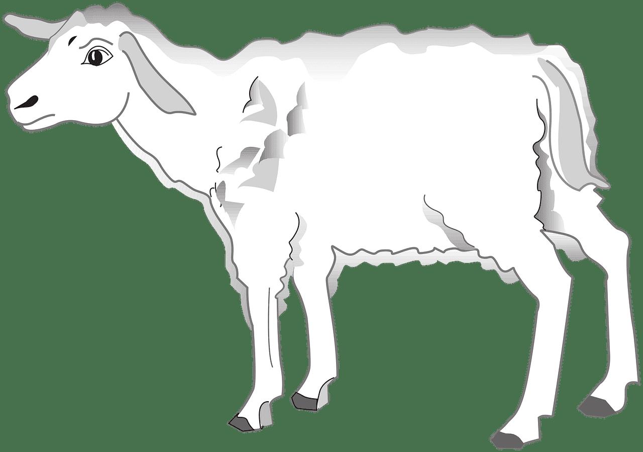 Lamb clipart transparent for kids
