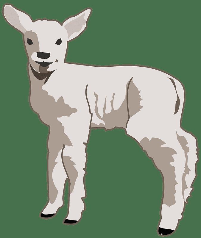 Lamb clipart transparent