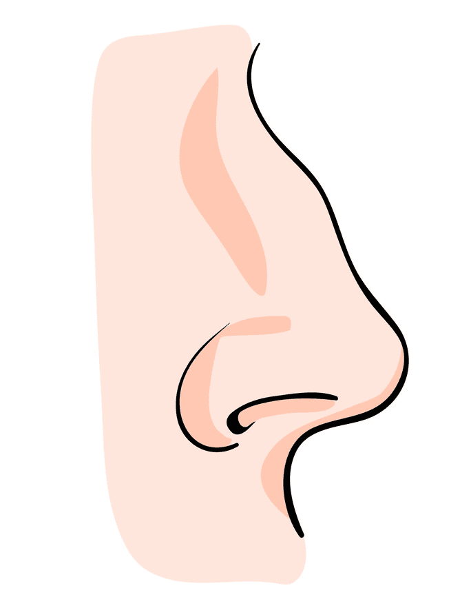 Nose clipart download