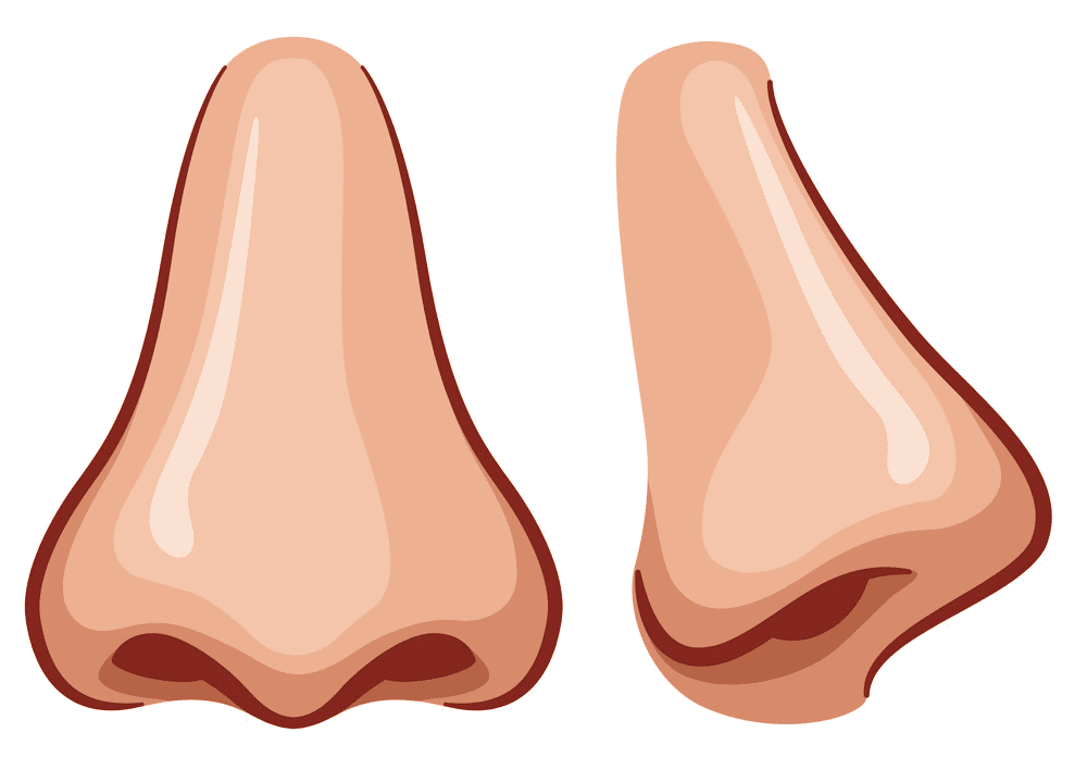 Nose clipart image