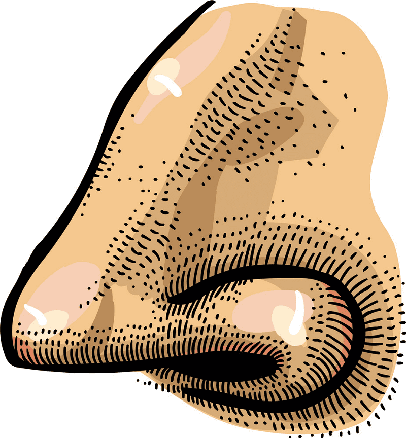 Nose clipart png 6