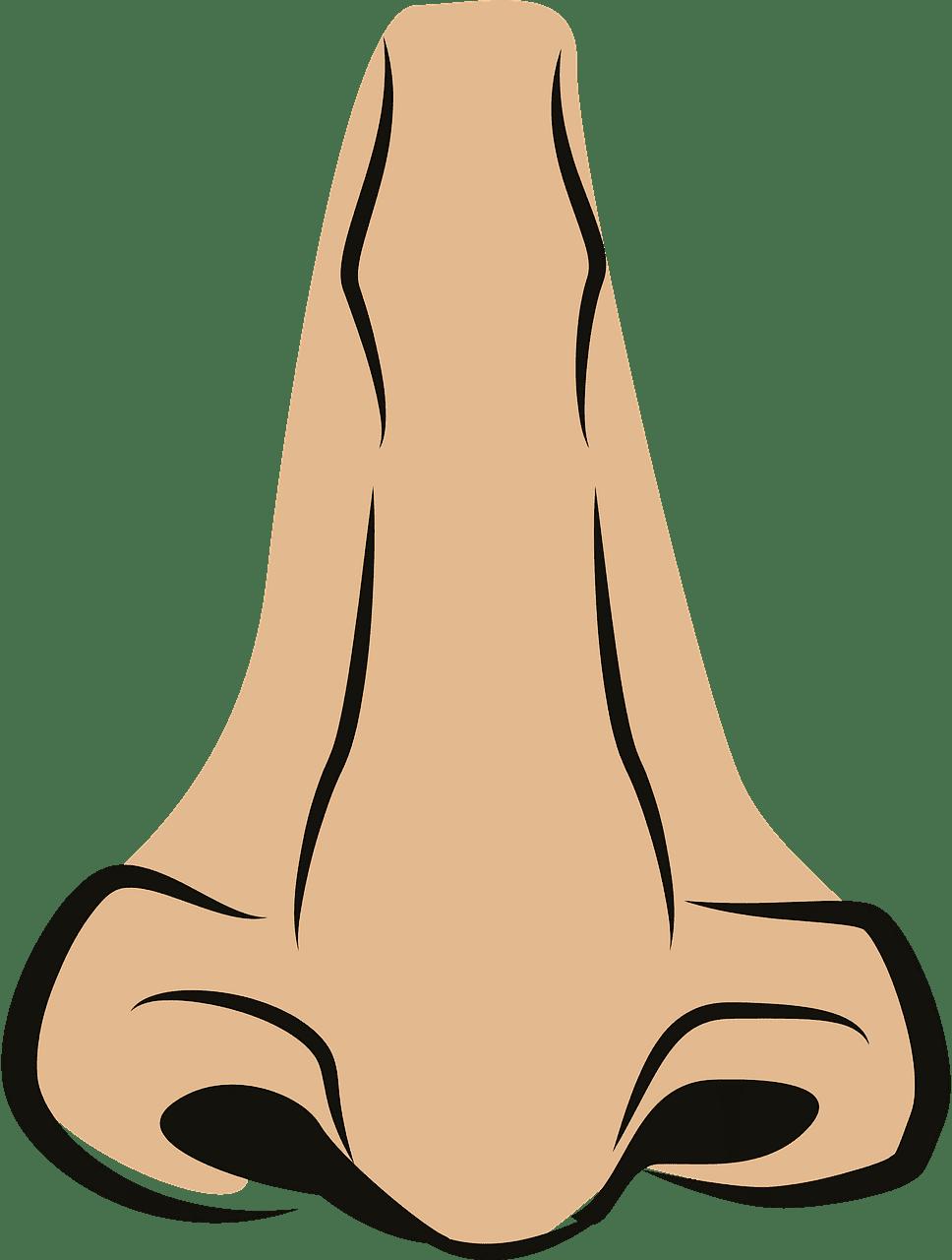 Nose clipart transparent 12