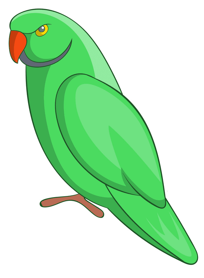 Parrot clipart 4