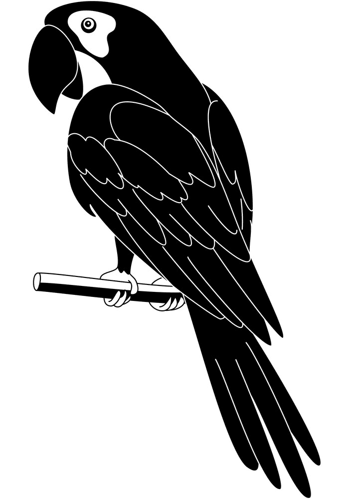 Parrot clipart Black and White free