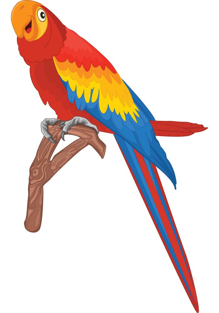 Parrot clipart download