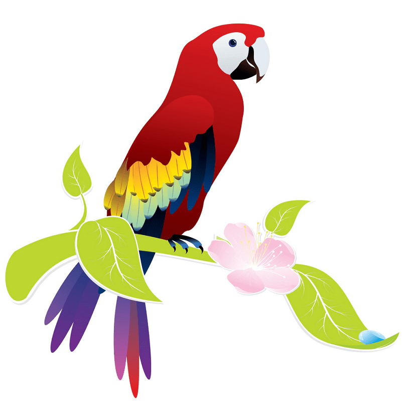 Parrot clipart for kids