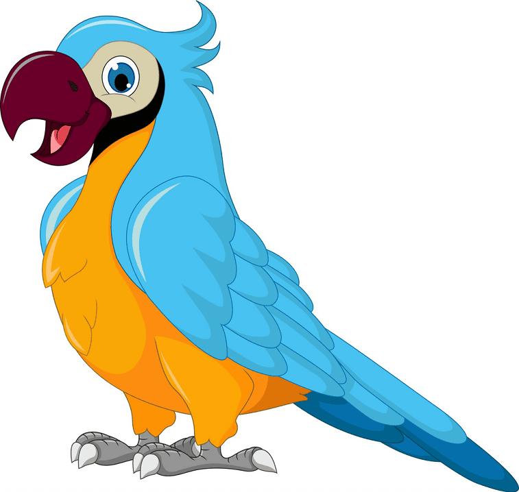Parrot clipart image