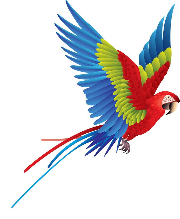 Parrot clipart picture