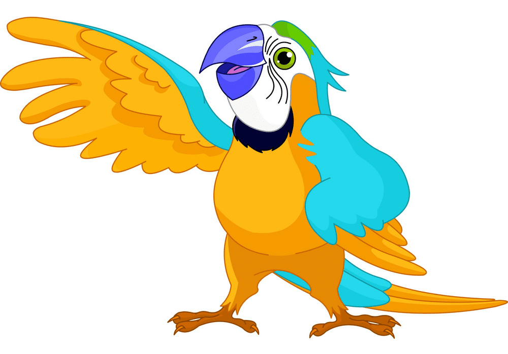 Parrot clipart png image