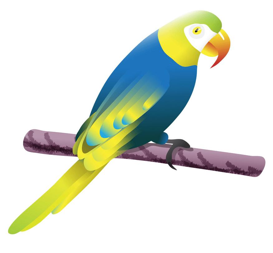 Parrot clipart png images