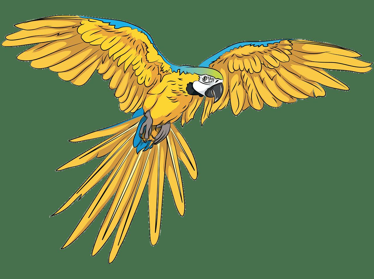 Parrot clipart transparent 2