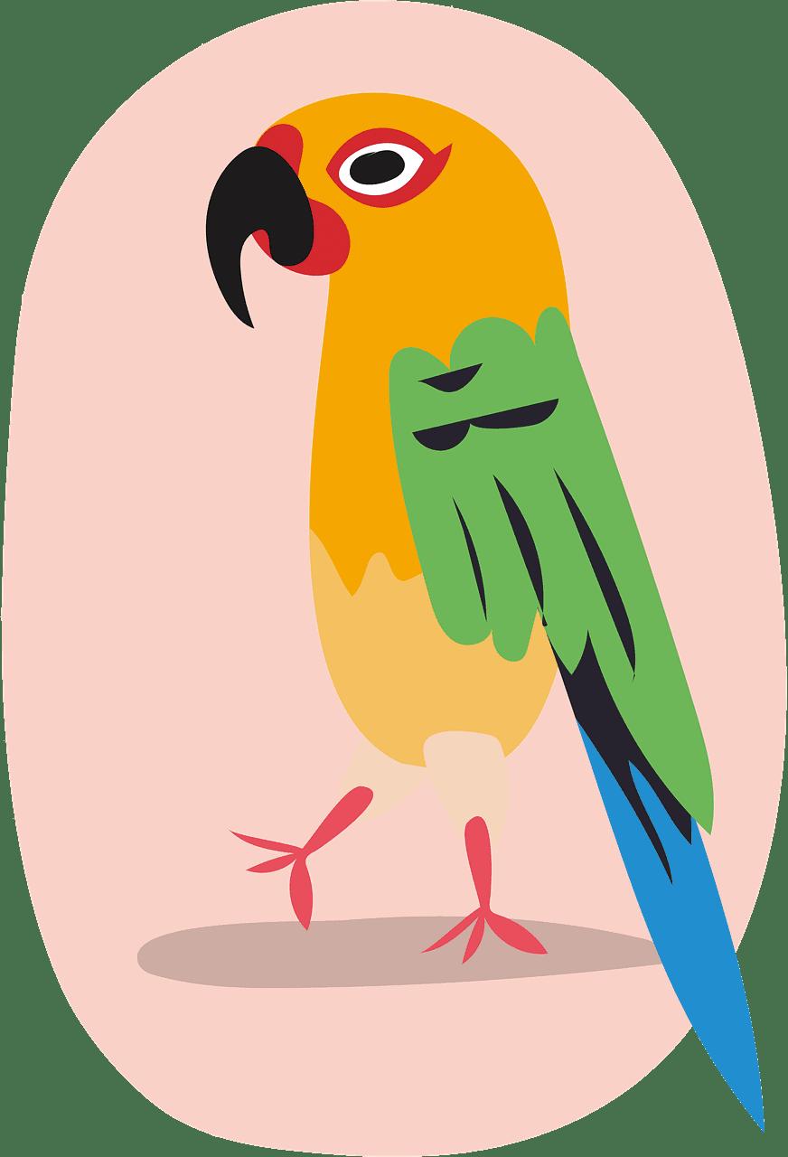 Parrot clipart transparent 5