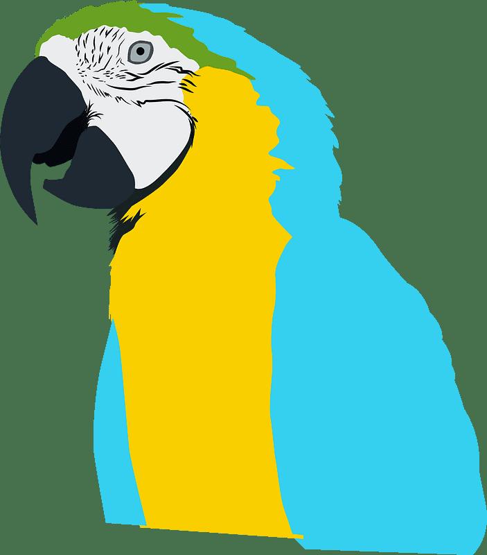 Parrot clipart transparent 7