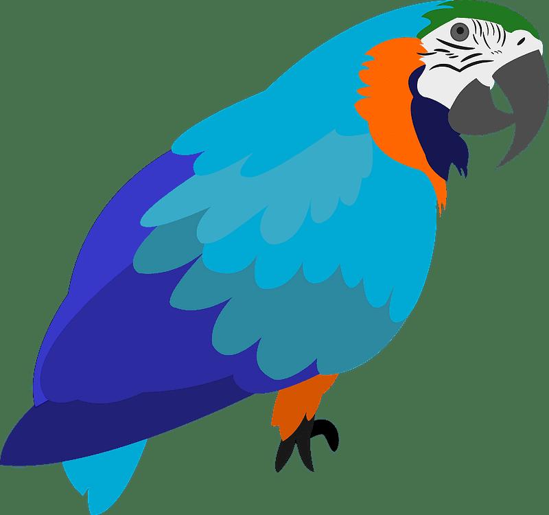Parrot clipart transparent 9
