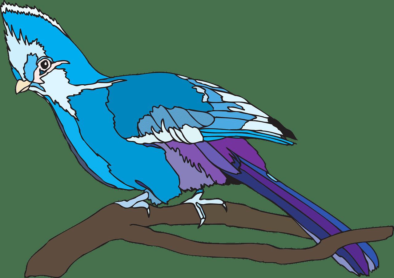 Parrot clipart transparent background 5