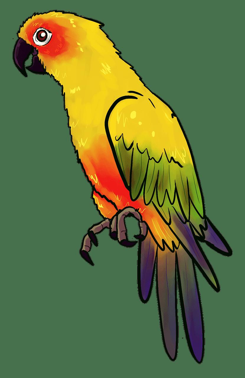 Parrot clipart transparent for kid