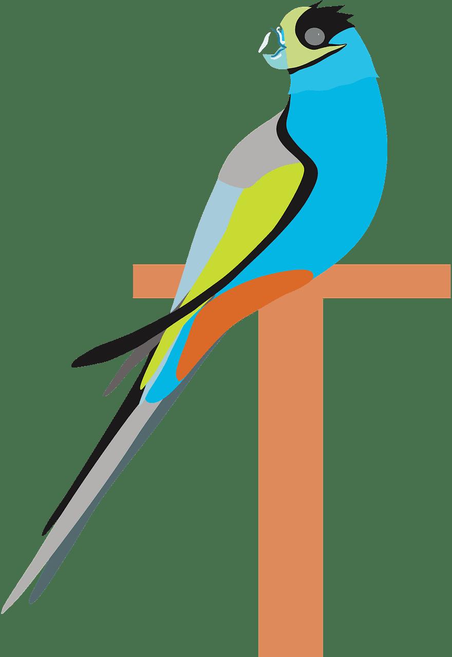 Parrot clipart transparent for kids