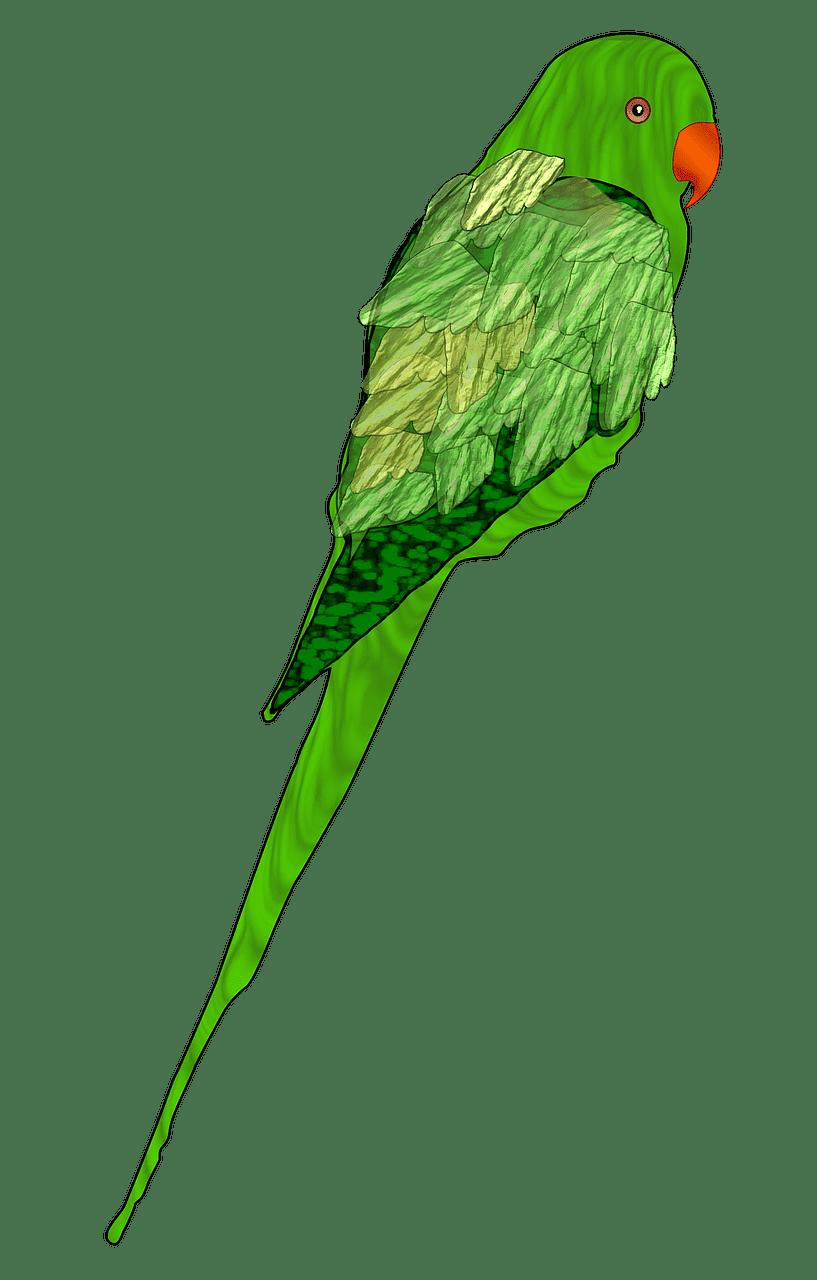 Parrot clipart transparent free