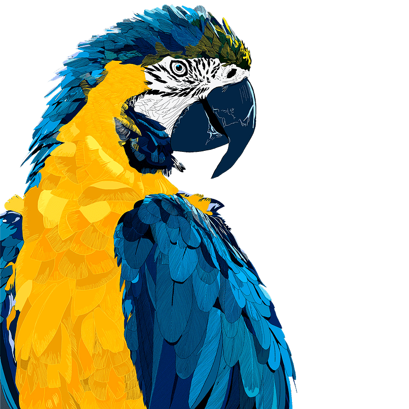 Parrot clipart transparent images
