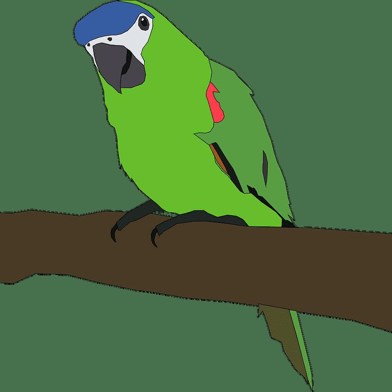 Parrot clipart transparent png