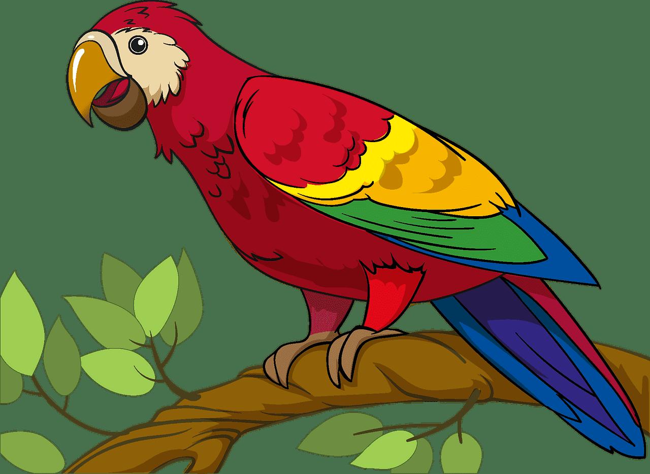 Parrot clipart transparent