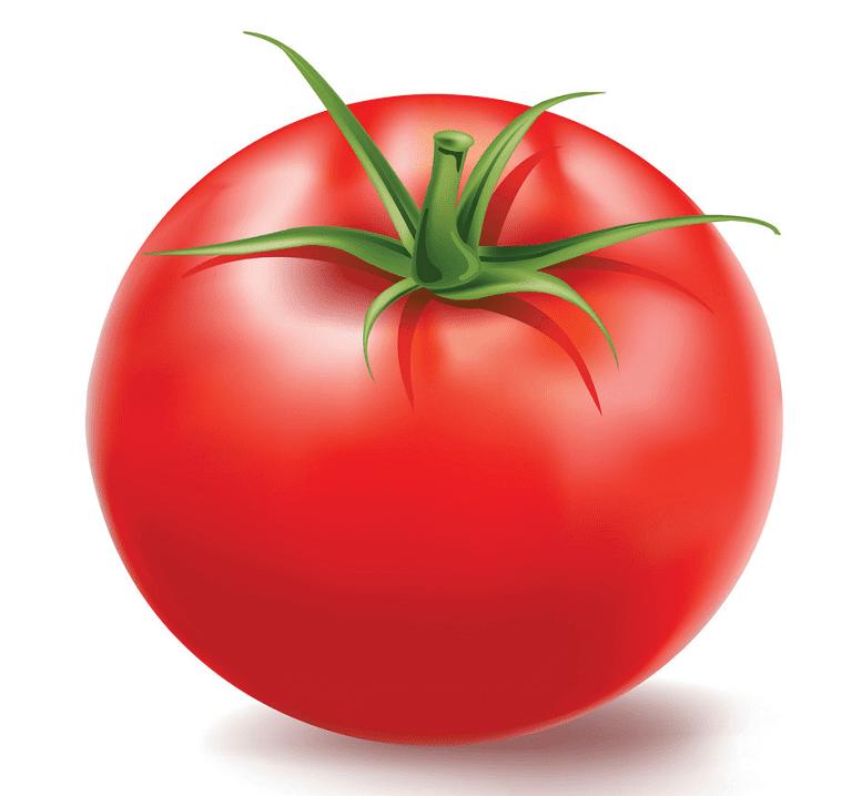 Tomato clipart free