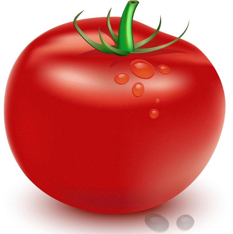 Tomato clipart picture