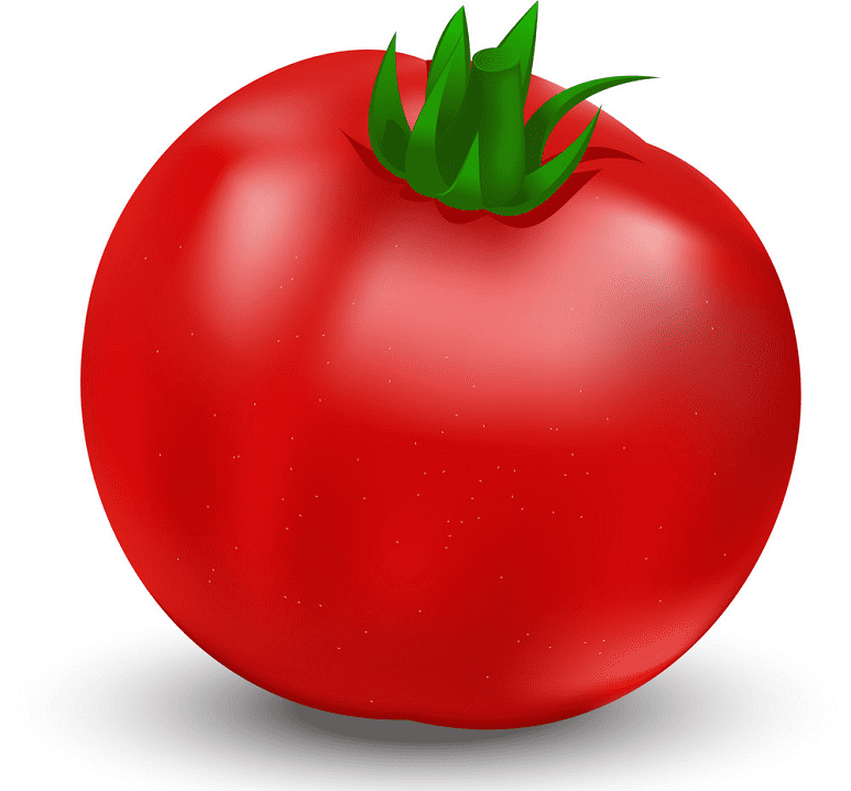 Tomato clipart png images