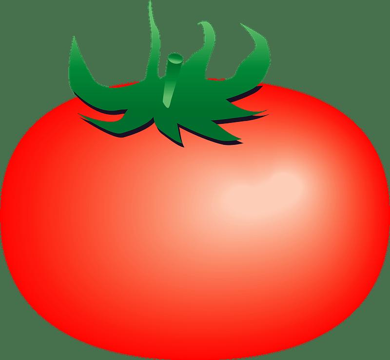 Tomato clipart transparent 10