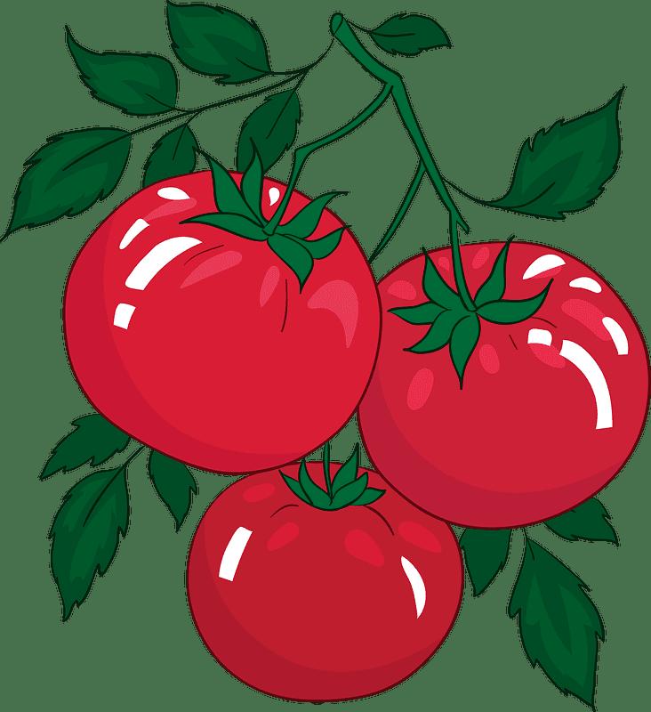 Tomato clipart transparent 3