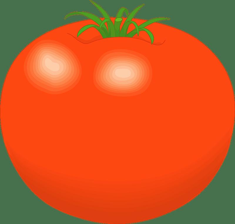 Tomato clipart transparent 5